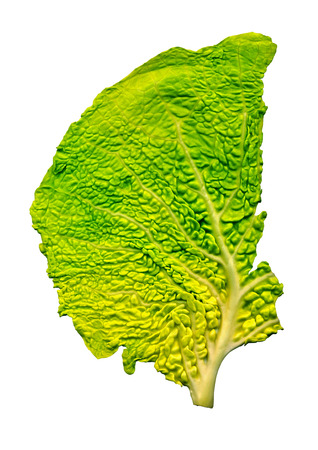 Detailed yellow green cabbage leaf close up isolated on white Stock Photo