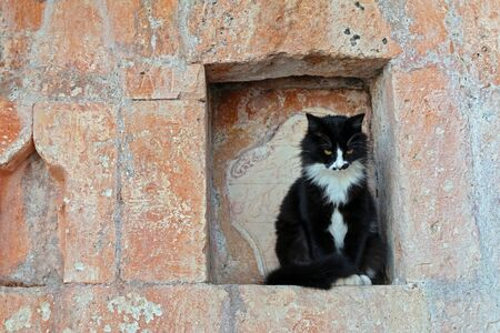 Very seriously looking black cat with white spots on the nose and chest is sitting still in the niche of a bright brown historical wall like he is on duty. Stock Photo
