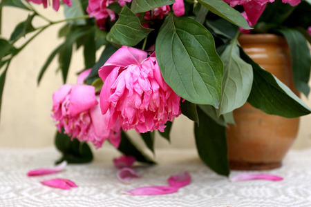 Wilting big pink flowers in an old style clay pot on the table covered  with vintage tablecloth  with a few fallen peony petals on the top and greyish yellow wall in the background. Focus on the front flower and leaf.