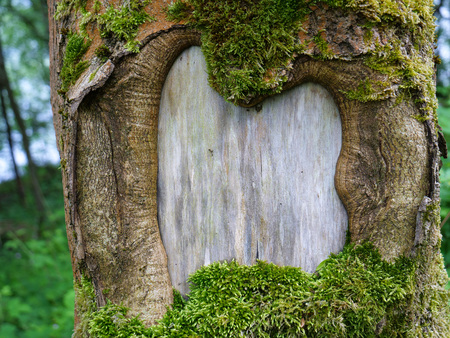 Close up of an old mossy tree trunk with bold framed natural formation for text or picture in it