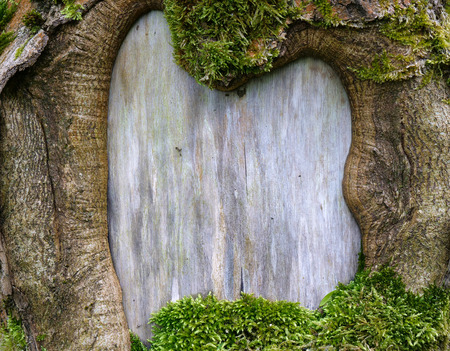 Close up of natural old tree bark frame with moss for picture or text