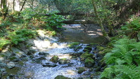 Muir Woods Babbling Brook