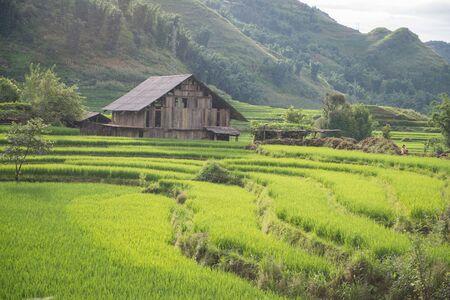 champ de mais: Chalet dans le champ de maïs à jour pleut