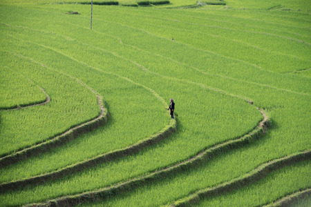 a woman stand on the rice field Stock Photo