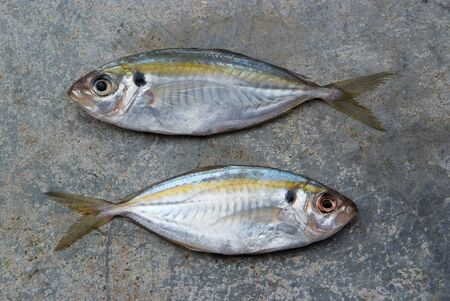 cyprinoid: The yellow stripe trevally fish on the texture of the concrete. Stock Photo