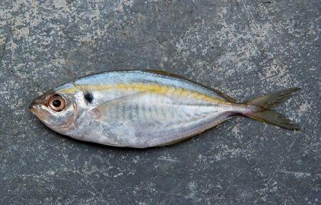 scardinius: The yellow stripe trevally fish on the texture of the concrete. Stock Photo