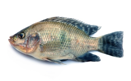 marine fish: Fresh fish isolated on a white background  Stock Photo