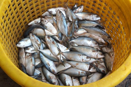 The yellow stripe trevally fish in the yellow basket. Stock Photo - 11718351