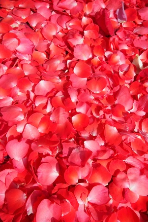 Background of red rose petals  photo
