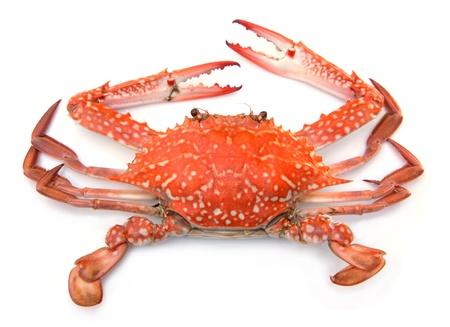 garra: Cangrejo rojo aislado en fondo blanco