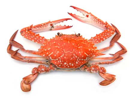 food fight: Red crab isolated on white background Stock Photo