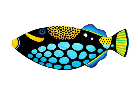 Colorful painting Collection of trigger fishes set  Stock Photo - 13519754