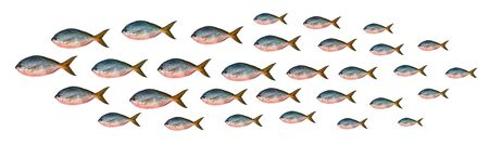 Yellowtail fusilier fish isolated on white background  Stock Photo - 15449790