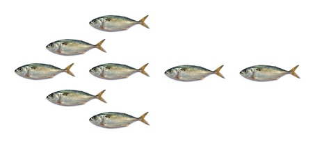 Arrowhead mackerel fish isolated on the white background