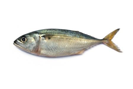 Fresh mackerel fish isolated on the white background