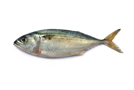 raw fish: Fresh mackerel fish isolated on the white background