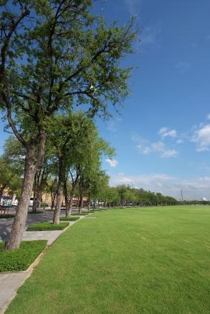 Green tree and blue sky in city park under sunny light  Stock Photo