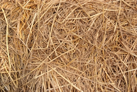 Close up of The natural Straw texture background