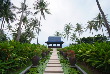 Walkway on pond full of water lilies in tropical garden, Koh Samui, Thailand