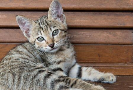 Tabby cat with green eyes lying on wood larder  photo