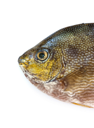 bluespotted: Close up Java rabbitfish, Bluespotted spinefish or Streaked spinefoot fish on a white background Stock Photo