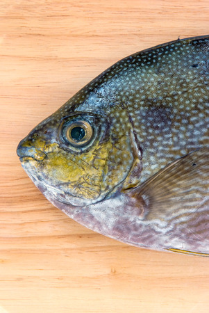 bluespotted: Close up Java rabbitfish, Bluespotted spinefish or Streaked spinefoot fish on a wood background