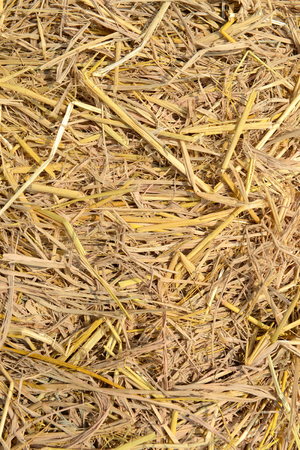 Close up of The natural Straw texture background. photo