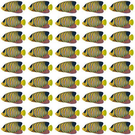 angelfish: Acrylic painting Regal Angelfish Pattern isolated on white background
