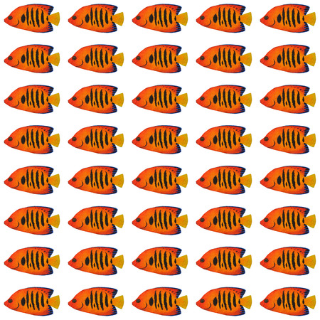 angelfish: Acrylic painting Flame Angelfish pattern isolated on white background
