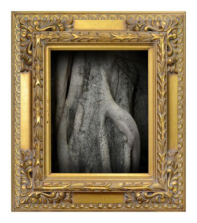 Closeup root around tree trunk picture in Antique gold frame isolated on the white background vintage style