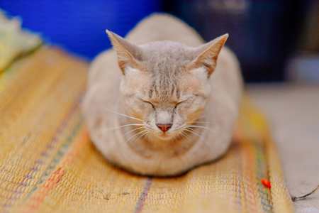 Closeup brown-eyed cat sleeping on the floor at home Stok Fotoğraf