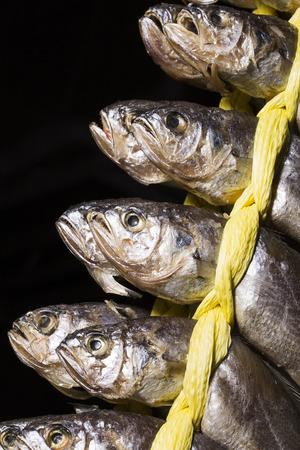 string together: Seafood