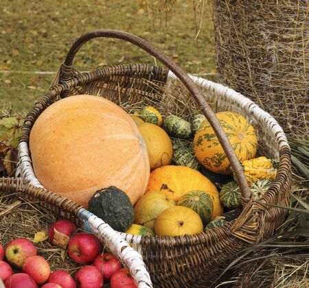 Autumn harvest in various sizes and colors pumpkins put large basket photo