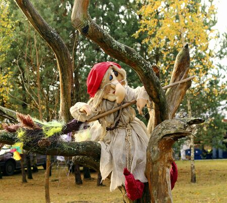 This is a witch sitting on the tree branch