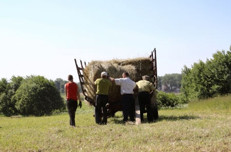 haymaking: Farmers loading of the tractor trailer of hay rolls