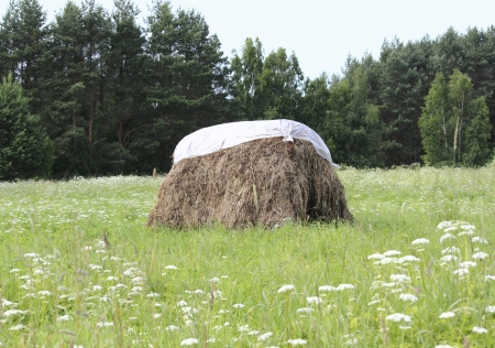 weald: a haystack stacked in the meadow