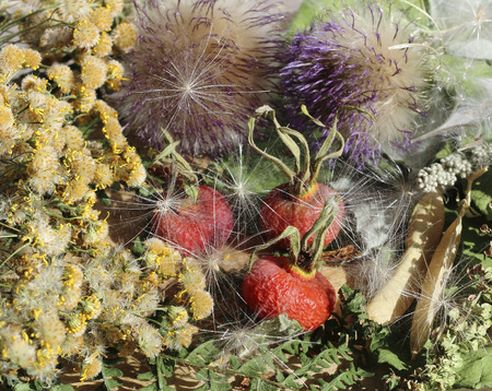 plant antioxidants: Close Up of dried rosehip berries and various herbs