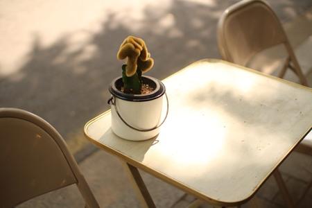 Sunny flowerpot