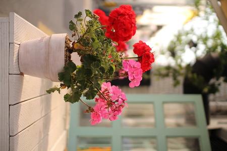 テラスの植木鉢