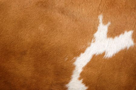 Close up of a brown Cow Coat