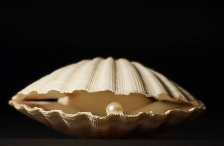 clam: Scallop Shell with Perl on black Blackground