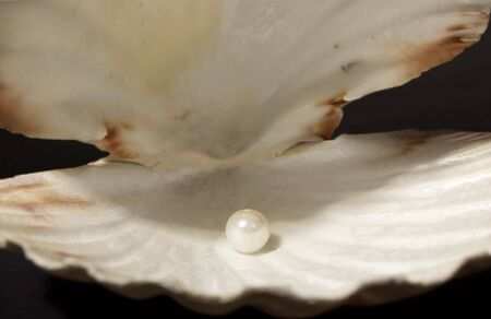 Pearl Inside of an open Shell Stock Photo - 5819183
