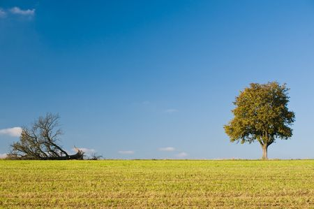 Two Different Trees Stock Photo - 5911922