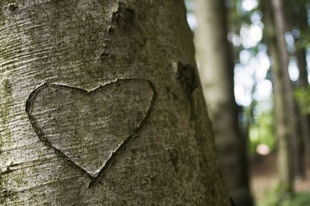 Love Carved on a Tree