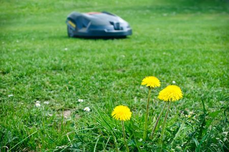 Lawn Mower Roboter photo