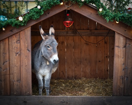 stable: Donkey in a wooden Christmas Stable Stock Photo