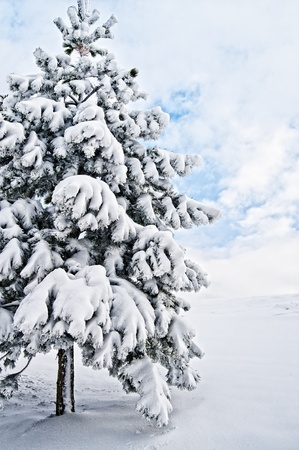 Single snowy Pine Tree with some Clouds