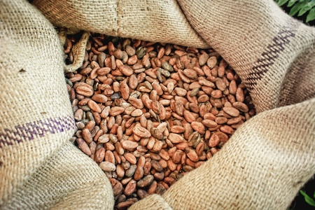 bean bag: Kakaobohnen01(4).jpg Stock Photo