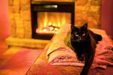 warm colors: Gato por una chimenea