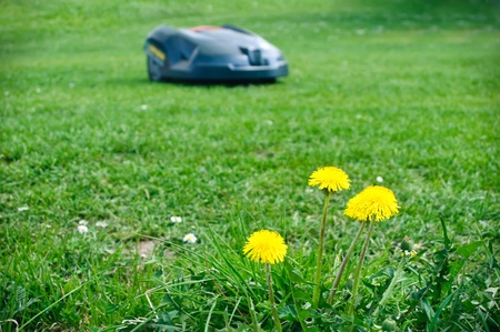 Robot lawn mower with dandelions in foreground Stock Photo